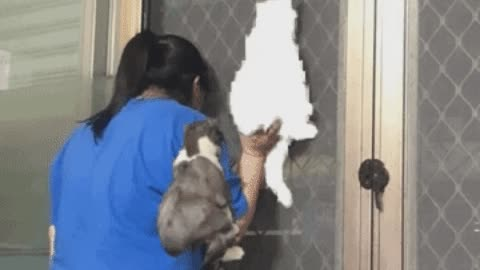 Cat and hooman snooping