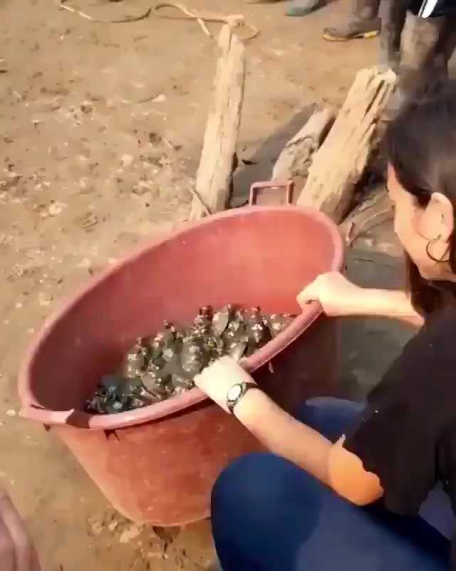 Liberación de hermosas tortugas bebes