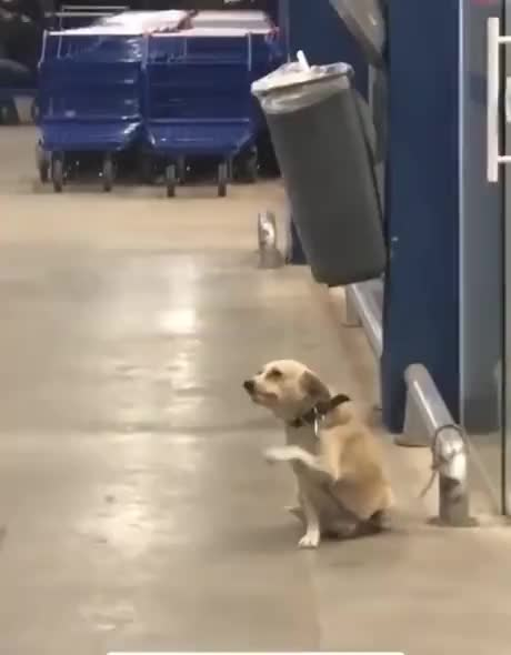 This Dog waves goodbye to everyone who leaves the store