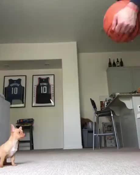 Mini doggos sense of balance
